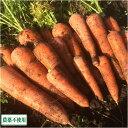 にんじん(土付き) 5kg 農薬不使用 (青森県 須藤農園) 産地直送