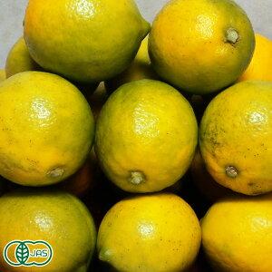 湘南プライムレモンライム サイズ混合 3kg 有機JAS (神奈川県 自然園いしわた農場) 産地直送