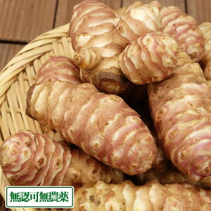 紫菊芋 5kg (福井県 よしむら農園) 無認可無農薬 産地直送