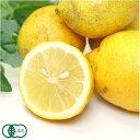 【A・Bサイズ混合】 有機 レモン 5kg 有機JAS (神奈川県 山下農園) 産地直送