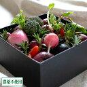 ベジタブルアレンジメント ボックスタイプ (兵庫県 ファーマーズヤード) 農薬・化学肥料不使用 産地直送