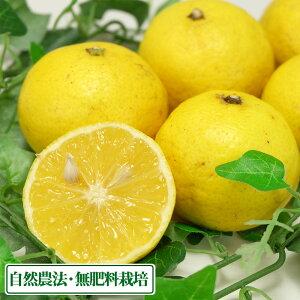 【A・B混合】 黄蜜柑(キミカン) 5kg 自然農法 (鹿児島県 かんとりぃぱぁく) 産地直送