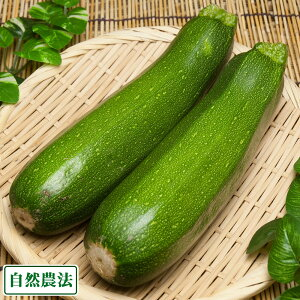 ズッキーニ 約7.5kg 自然農法 (沖縄県 大宜味農場) 産地直送