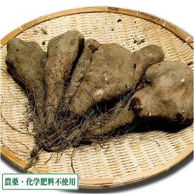 短形自然薯 (土付き) 5kg 農薬不使用 (青森県 須藤農園) 産地直送