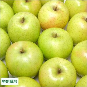 りんご 王林 家庭用 5kg箱 特別栽培 (青森県 さいとうりんご園) 産地直送