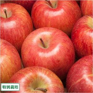りんご ふじ 家庭用 5kg箱 特別栽培 (青森県 さいとうりんご園) 産地直送