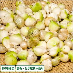 無臭にんにく 1kg 特別栽培 農薬不使用 (青森県 須藤農園) 産地直送
