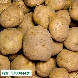きたあかり 10kg 農薬不使用 (青森県 須藤農園) 産地直送
