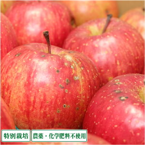 早生りんご(赤) 家庭用 4kg箱 特別栽培(無・無) (青森県 北上農園) 産地直送