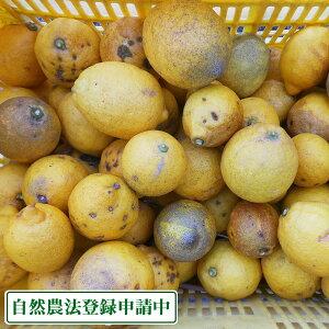 【B品・訳あり】【クール冷蔵便】広島県産(とびしま)レモン 5kg 無選別 自然農法登録中 (広島県 とびしま農園)