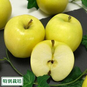 もりのかがやき A品 5kg 特別栽培 (青森県 阿部農園) りんご 産地直送