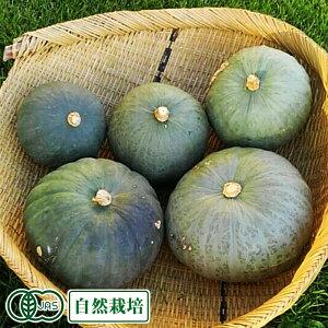 東京南瓜 約6kg 有機JAS 自然栽培 (青森県 SKOS合同会社) かぼちゃ