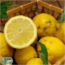 【A・B品サイズ混合】有機 レモン 5kg 有機JAS (佐賀県 佐藤農場株式会社) 産地直送