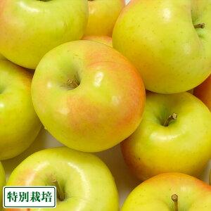 ぐんま名月 A品 5kg箱 特別栽培 (青森県 阿部農園) りんご 産地直送