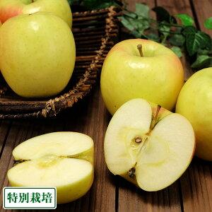 ぐんま名月 秀品 10kg箱 特別栽培 (青森県 阿部農園) りんご 産地直送