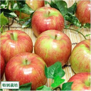 【家庭用】有機りんご サンふじ 5kg箱 有機JAS (青森県 北上農園) 産地直送