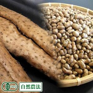 有機 自然薯 家庭用 約1.2kg(1〜5本)・むかご100gセット 有機JAS・自然農法 (熊本県 那須自然農園) 産地直送