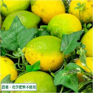 レモン A・B品サイズ混合 3kg 県特別栽培(無・無) (熊本県 オレンジヒルズ) 産地直送