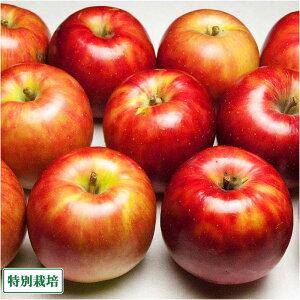 【訳あり】 りんご つがる 10kg箱 特別栽培 (青森県 阿部農園) 産地直送