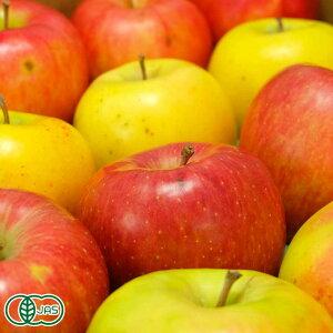 【家庭用】有機サンふじ 黄りんご 2色セット 10kg箱 有機JAS (青森県 北上農園) 産地直送