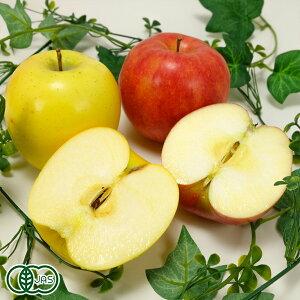 【家庭用】有機 サンふじ 黄りんご 2色セット 小玉 4kg箱 有機JAS (青森県 北上農園) 産地直送