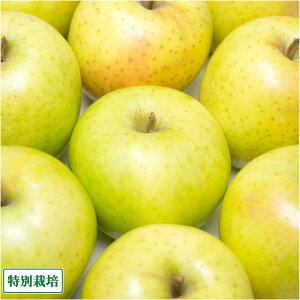 無・無 黄色 りんご 4種セット A品 6kg箱 特別栽培 (青森県 北上農園) 産地直送
