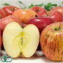 【家庭用】 有機 りんご ふじ 約10kg 有機JAS (青森県 和楽堂養生農苑) 産地直送