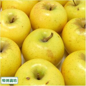 【加工用】 無・無りんご(黄) 1kg箱 特別栽培 (青森県 北上農園) 産地直送