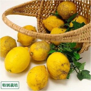 【B品】 レモン 2kg 特別栽培 (静岡県 外山農園) 産地直送