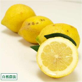 【A・B混合・クール便】レモン 3kg 自然農法 (神奈川県 興津農園) 産地直送