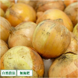 【サイズ混合・訳あり】 玉ねぎ 10kg 自然農法 無肥料 (兵庫県淡路島 花岡農恵園) 産地直送