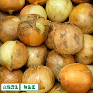 【2S〜3Sサイズ・訳あり】 玉ねぎ 3kg 自然農法 無肥料 (兵庫県淡路島 花岡農恵園) 産地直送