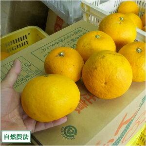 【A・B品混合】 甘夏 10kg 自然農法 (広島県 道谷農園) 産地直送