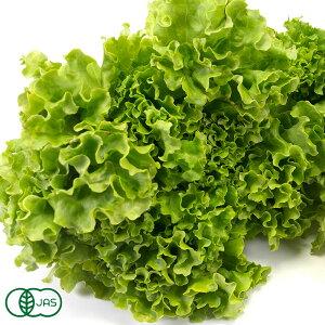 【クール冷蔵便】リーフレタス 1kg 有機JAS (青森県 自然食ねっと青森) 産地直送