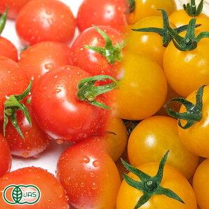 【クール冷蔵便】 有機 ミニトマト 赤・黄2色セット 150g×27パック 有機JAS (青森県 自然食ねっと青森) 産地直送