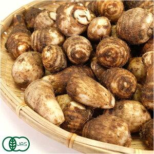 【サイズ混合】 有機 里芋 20kg 有機JAS (千葉県 株式会社びおロジ) 産地直送