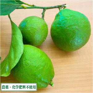 【無選別】 広島県産(とびしま) レモン (グリーン) 10kg 無・無 (広島県 とびしま農園) 産地直送