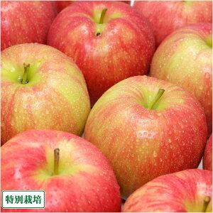 【家庭用】 無・無 ジョナゴールド 5kg箱 特別栽培 (青森県 北上農園) 産地直送