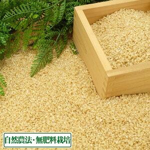 【令和2年度産】はるみ 玄米 10kg 自然農法 (徳島県 久米実) 産地直送