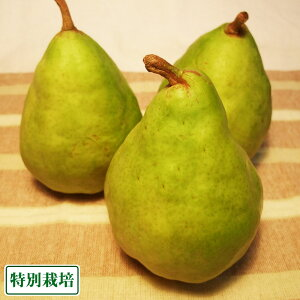 【B品】ル・レクチェ 約3kg 特別栽培 (長野県 さんさんファーム) 産地直送