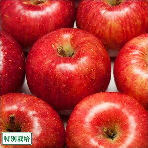 【セール】りんご ふじ 大玉 A品 5kg箱 特別栽培 (青森県 田村りんご農園) 産地直送