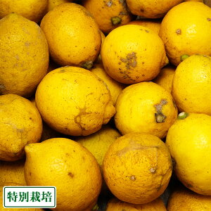 【B品・訳あり】レモン 5kg 県特別栽培(無・無)(熊本県 オレンジヒルズ) 産地直送