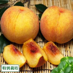 【クール便】桃 紅黄金桃 4kg 特別栽培 (山形県 森谷果樹園) 産地直送