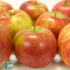 【家庭用】 有機 りんご(赤) 3kg箱 有機JAS (青森県 北上農園) 産地直送