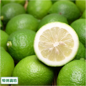 レモン(青) A品 10kg 県特別栽培 (熊本県 オレンジヒルズ) 産地直送