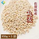 新麦 令和3年 大麦 佐賀県産 丸麦(大麦) 950g×5袋 α化 チャック付き 送料無料