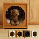 ※※※ B品 ※※※「木製ペットハウス【旧タイプ】 ※※※ B品 ※※※」  犬小屋 ペットベッド 石崎家具