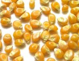 ●有機栽培 ポップコーン おやつに おつまみに!有機JAS認定品 業務用 1kg