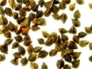 ★IMO認定品 玄蕎麦 500g×2 無添加/無農薬(化学合成農薬)不使用栽培 そば