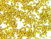 ■■化学合成農薬不使用  ミリオ あわ 粟 500g×24 うるお取り寄せのため、商品発送まで約4-5日かかります メーカー欠品の場合もありますことをご了解ください 送料無料